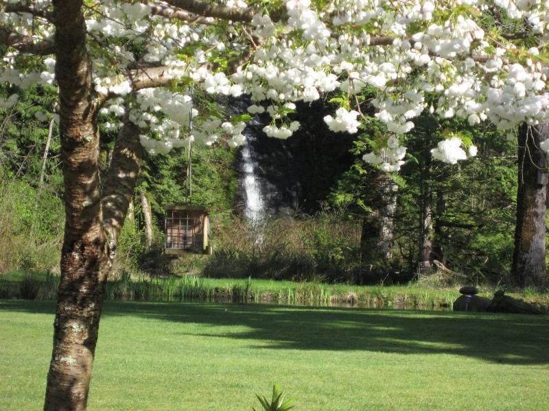Weergave van waterval in het voorjaar