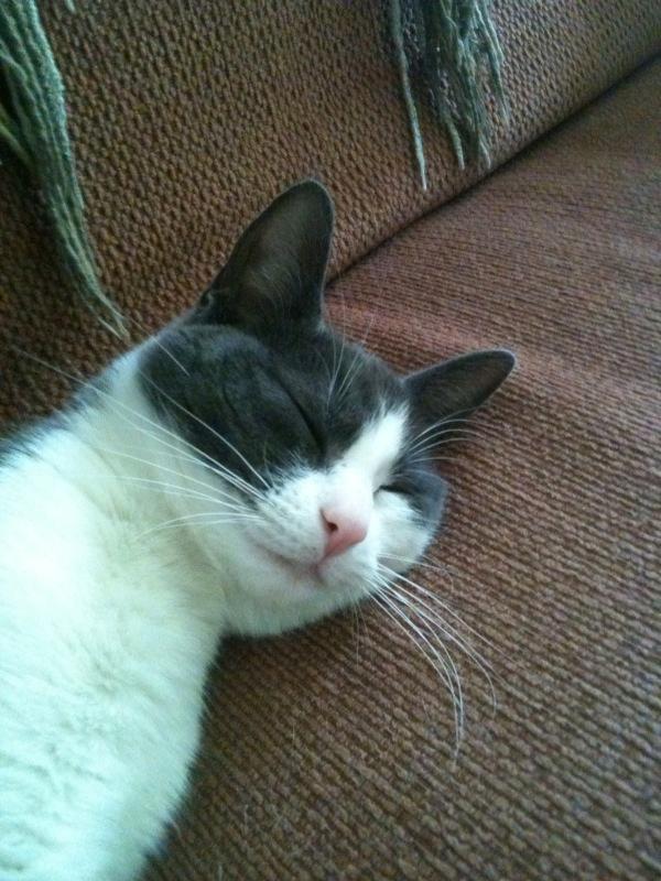 Chloe-ingezeten kitty