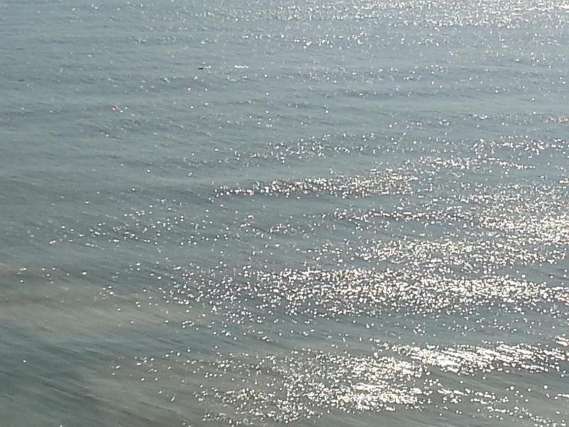 Dolphin watch depuis le balcon