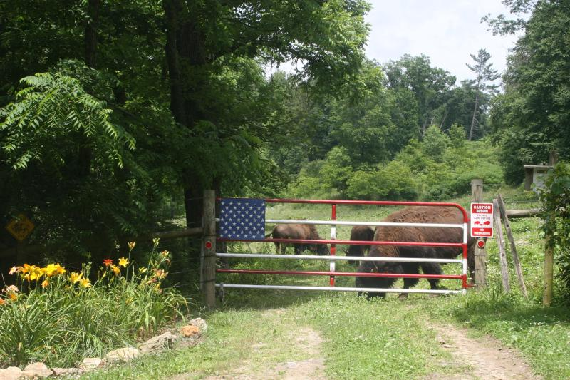 Feeding takes place most mornings at 9:30 by the American Flag corral