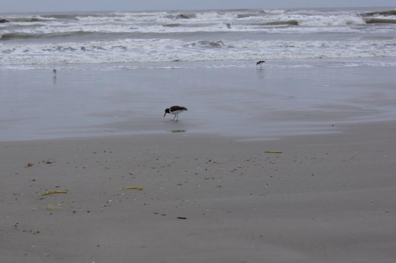 Birds at beach