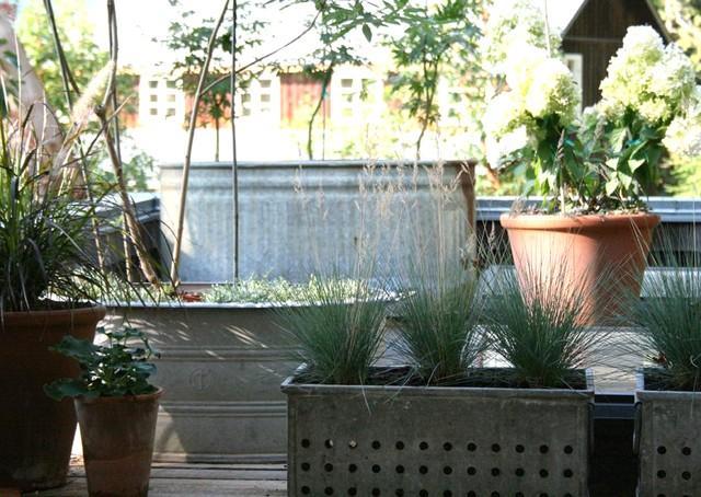 Utsikt över takträdgården.