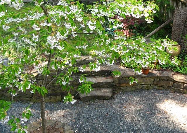 Titta ner från Bloom ingång, ett körsbärsträd i blom på gården.