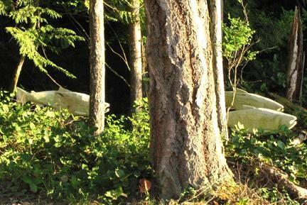 Ghost lax av Paul Burke simma genom den närliggande skogen