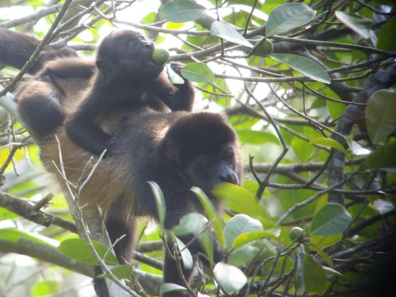 A Lot Of Monkey Business Going On In Costa Rica!