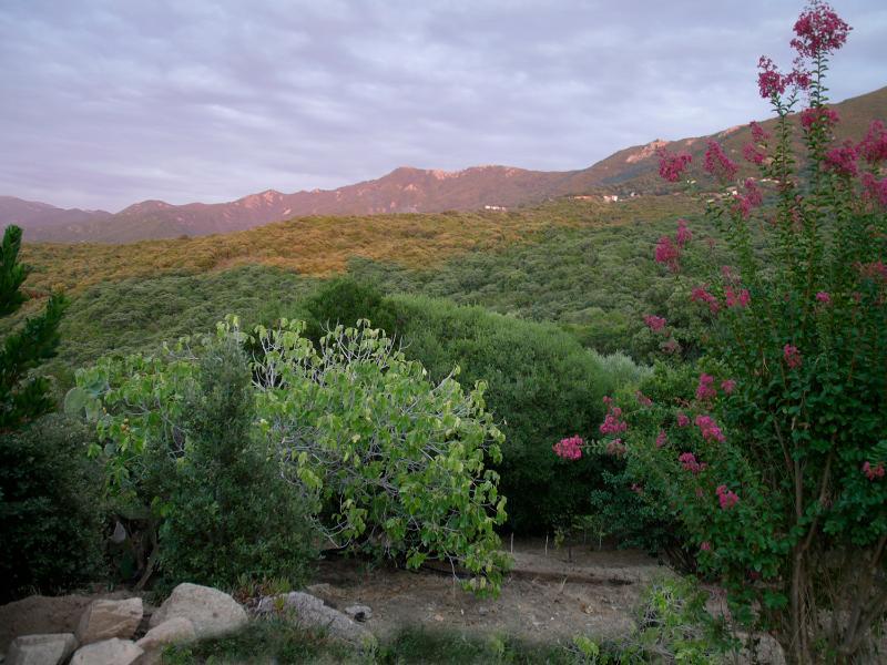 Ver las montañas desde la terraza trasera