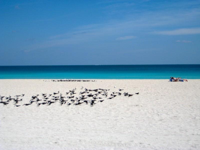 próximo a uma curta distância da praia