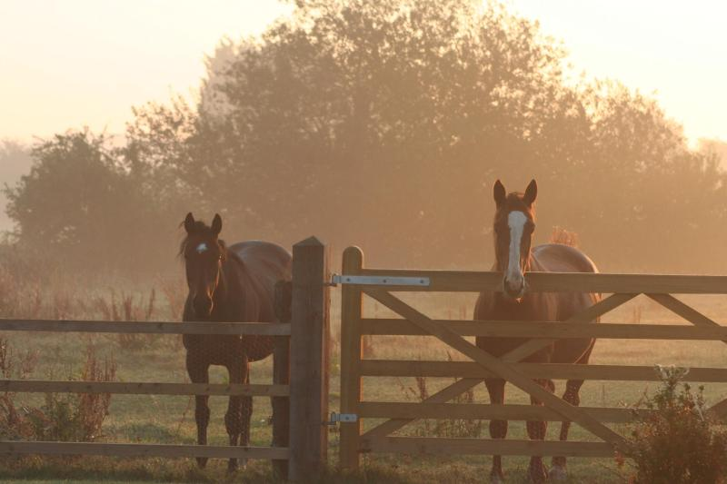typical sunrise with the horses