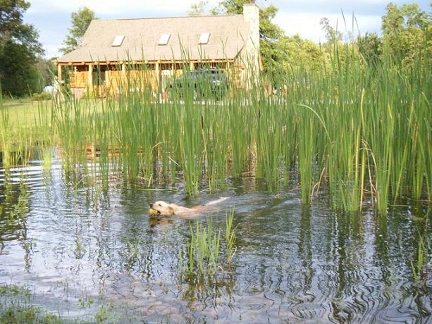 Willow pond is a hot spot for puppy dips and wet games of fetch.