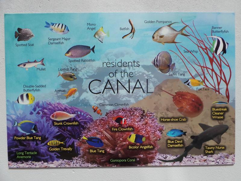 Korallenriff-Aquarium
