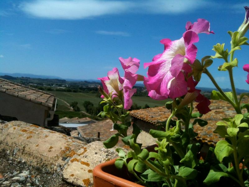 French Mediterranean Village House w  Roof Terrace, holiday rental in Pezenas