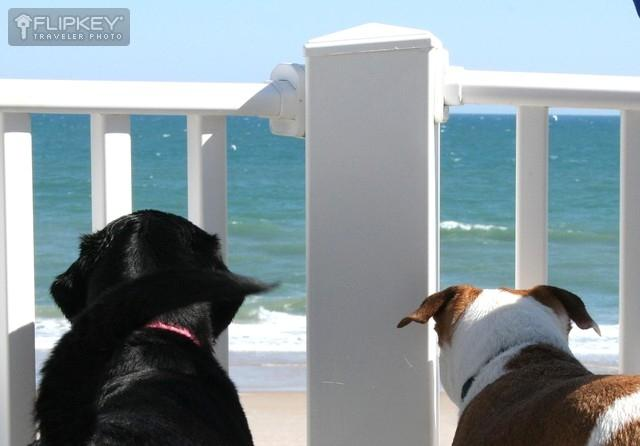 Even the dogs enjoyed the view from the deck