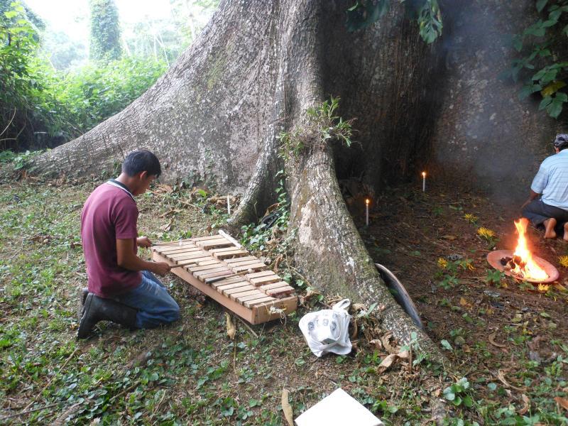 Mayan  shaman praying around a1000 year old sacred tree on property