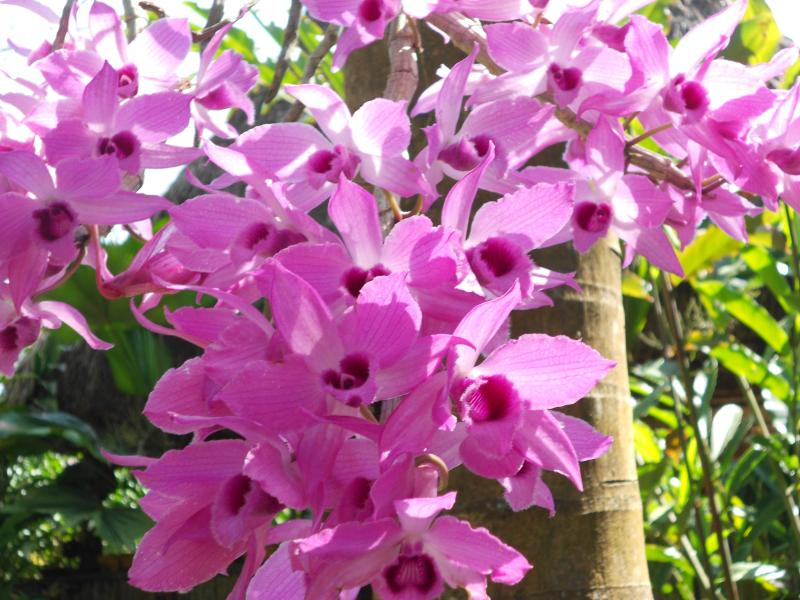 Indigenous orchids in bloom