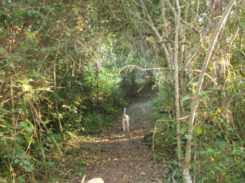 Trail leading to cabanas in a beautiful natural jungle setting