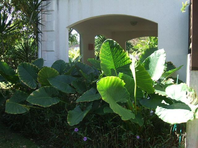 Lush gardens around side of patio providing privacy
