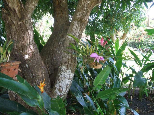 Orchids and birds of paradise in backyard gardens
