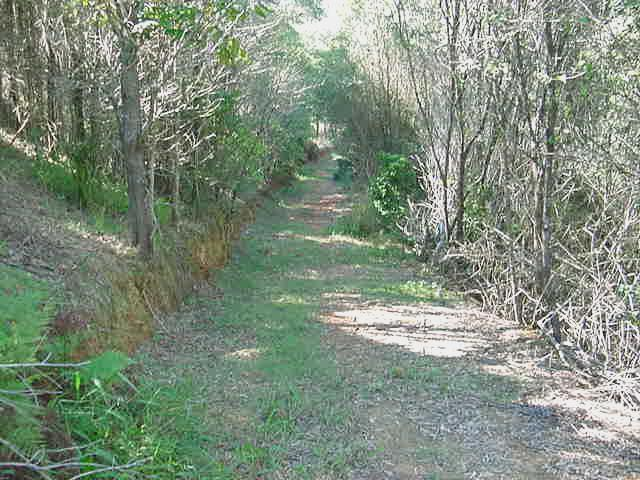 Bush walk trail section