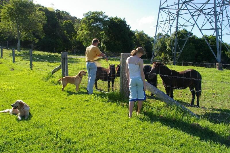 Guests feeding the horses