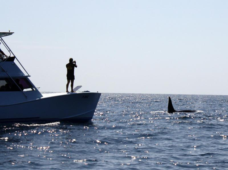 Even Killer Whales visit Cano Island
