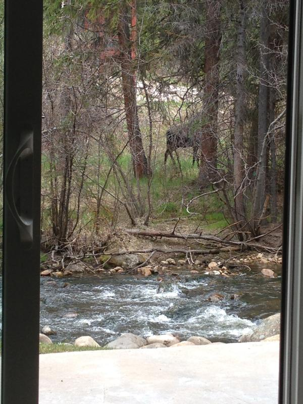 Moose out the back door -