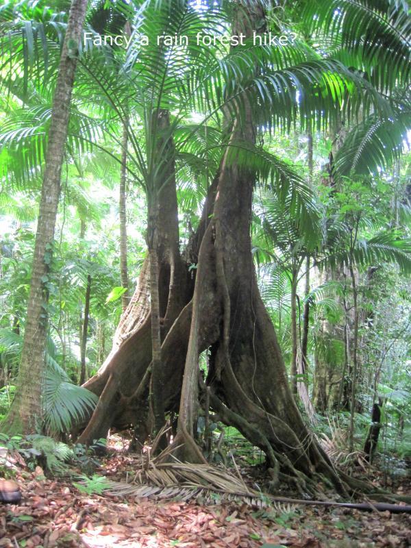Esplorare le foreste pluviali lussureggianti