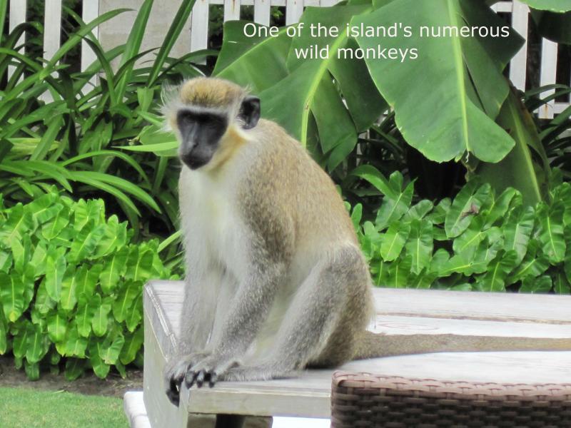 Sei destinato a vedere le scimmie...Ci sono più sull'isola che ci sono persone.