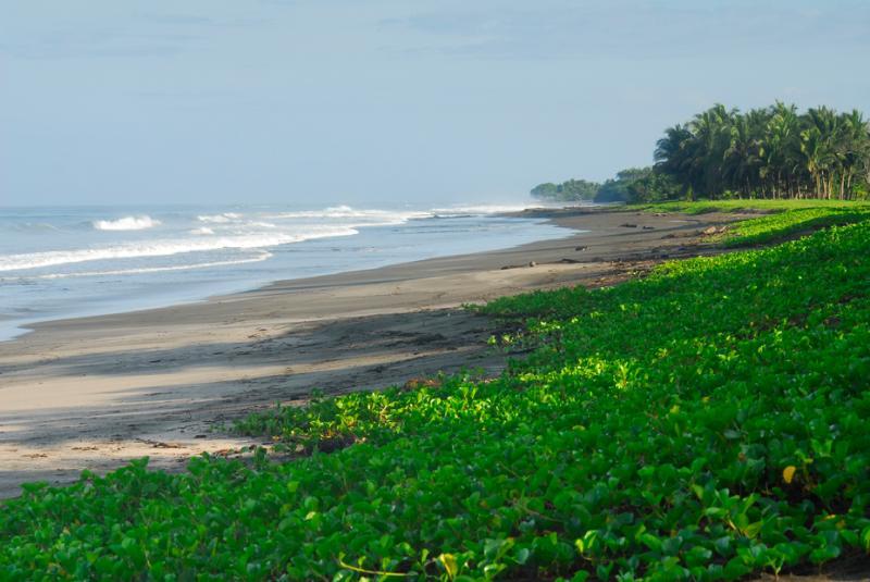 Playa Junquillal - 1km away