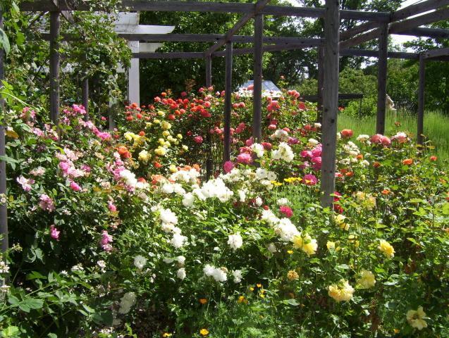 Rose Garden in het voorjaar.
