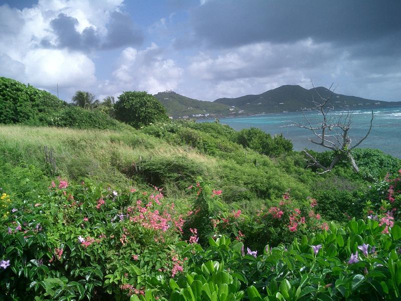 Wildflowers dot the grassy hillside down to the Villa's private beach.