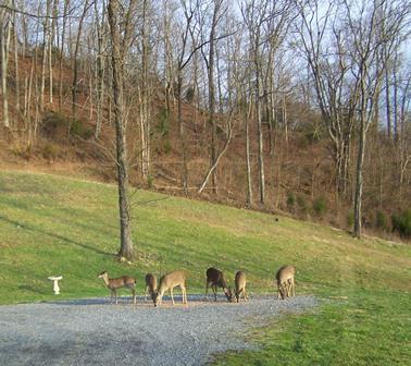 Hillside with Deer at Evening