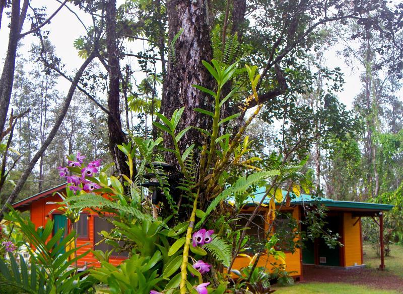 Le rainforest hideaway vous attend...
