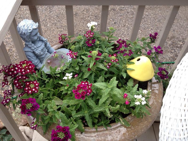 Lots of flower pots
