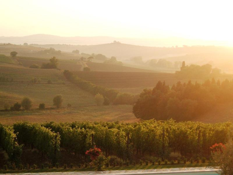 Our vineyard that produces grapes for Nobile di Montepulciano wine