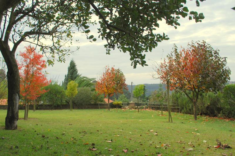 Trädgården - November 2011