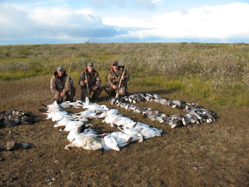 Day's Limit of 80 Snow Geese