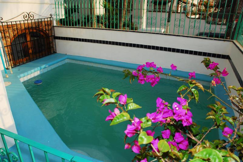 Our Pool Surrounded by Buganvillias Flowers