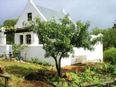 Rhebokskraal olive farm Cottages, holiday rental in Greyton