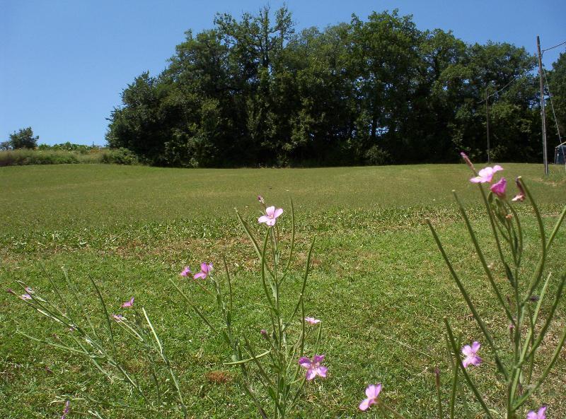 Back meadow