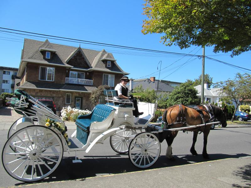 Watch horse drawn carraiges pass in front of home.