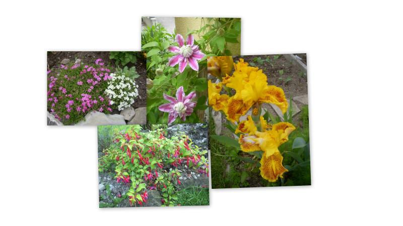 flower impressions garden