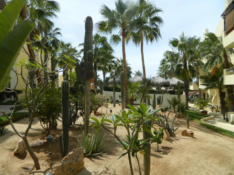 cactustuin