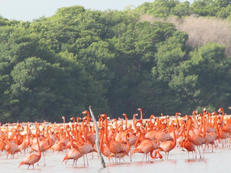 Reserva de la Biosfera Ría Celestún flamencos
