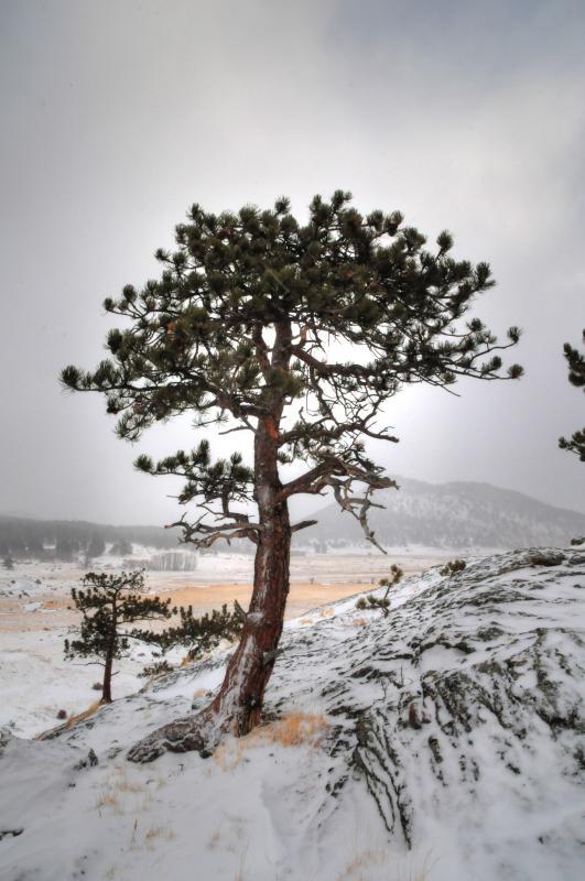 Vinter i Rocky Mountain National Park