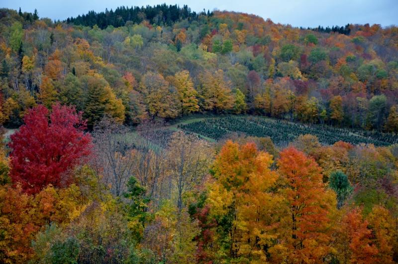Follaje de otoño increíble.