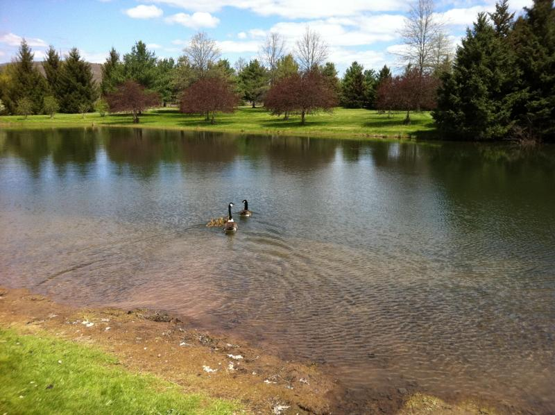 The ponds are a resting place for migratory birds