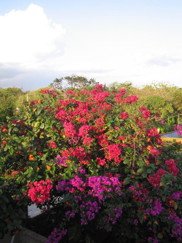 Garden from roof terrace