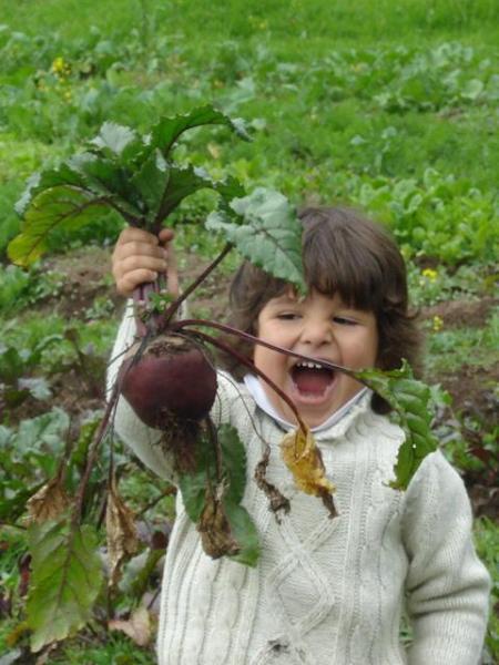 Gathering veggies from our organic garden...