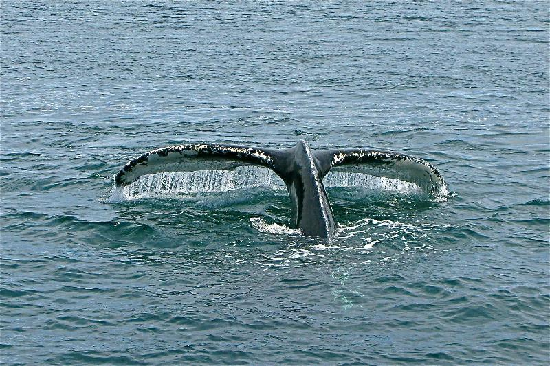 go on a whale watch!  wow