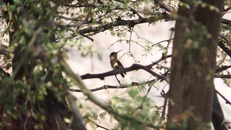 Birdwatchers Welcomed to Mancora